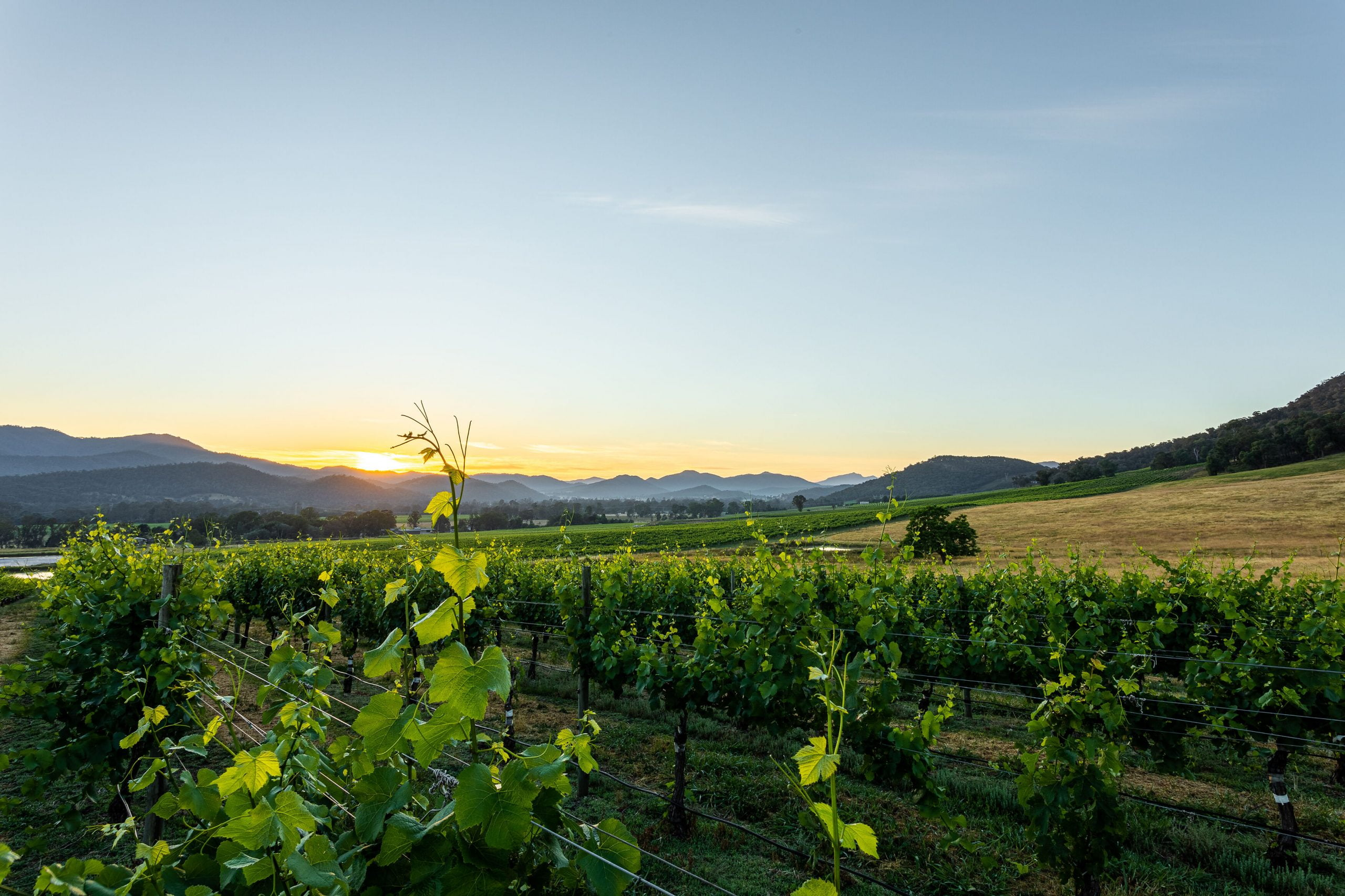 King Valley Winery Tours - North East Coachlines